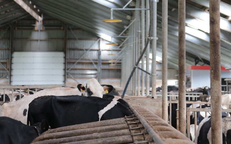 COWControl® Cow Positioning