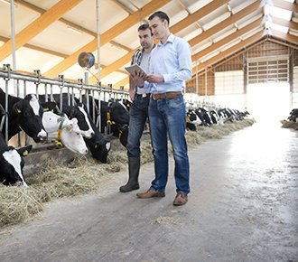 Large Dairy Herd Management