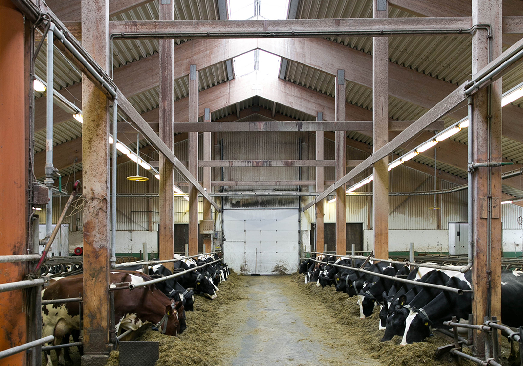 Barn with the Nedap COWcontrol - Cow Positioning