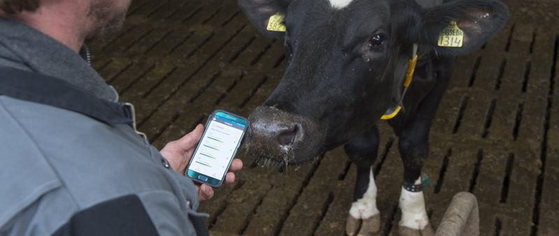 Cow Data Management - Cattle Management Software - Nedap