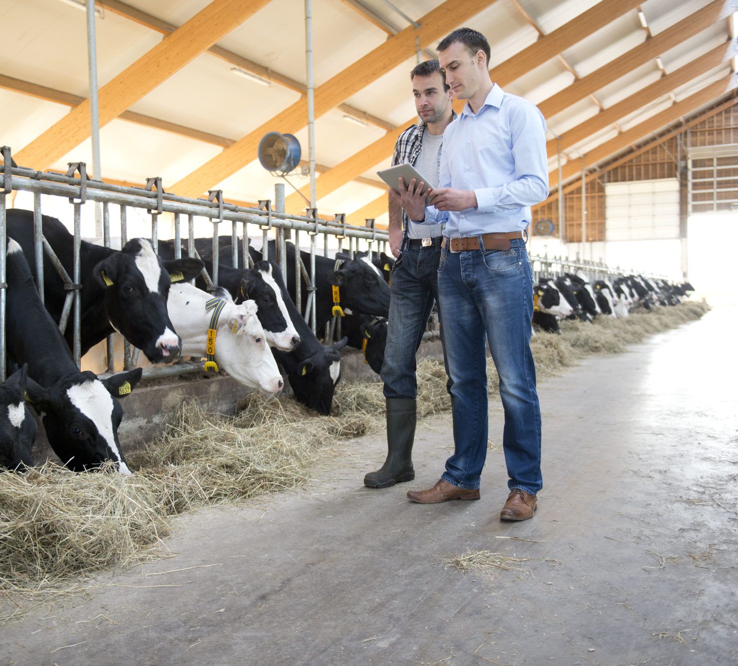 Nedap solutions - COWcontrol