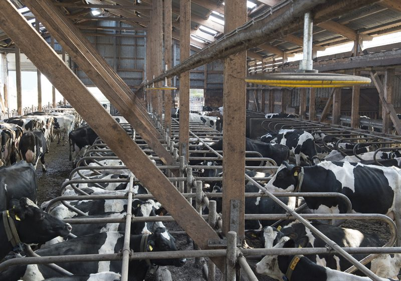Nedap COWcontrol - Cow Positioning