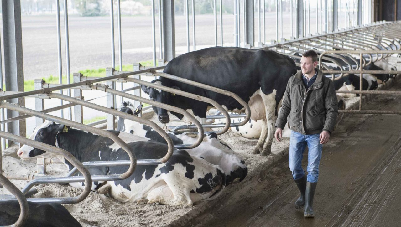 Nedap customer Matthijs Meijer walking in his barn