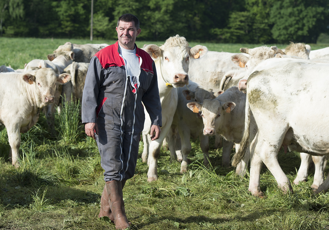 Eric Bonnot and his cows wearing the Nedap Smarttag Neck