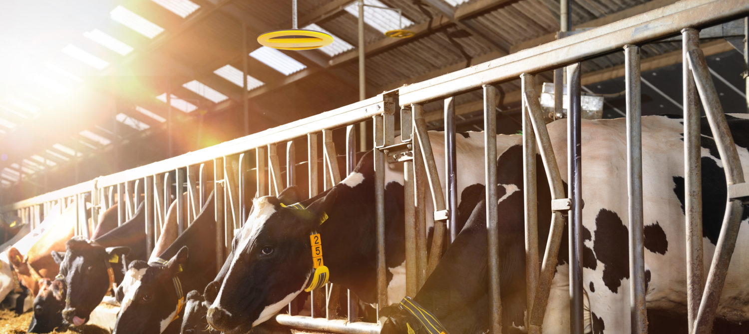 Nedap Cow Positioning