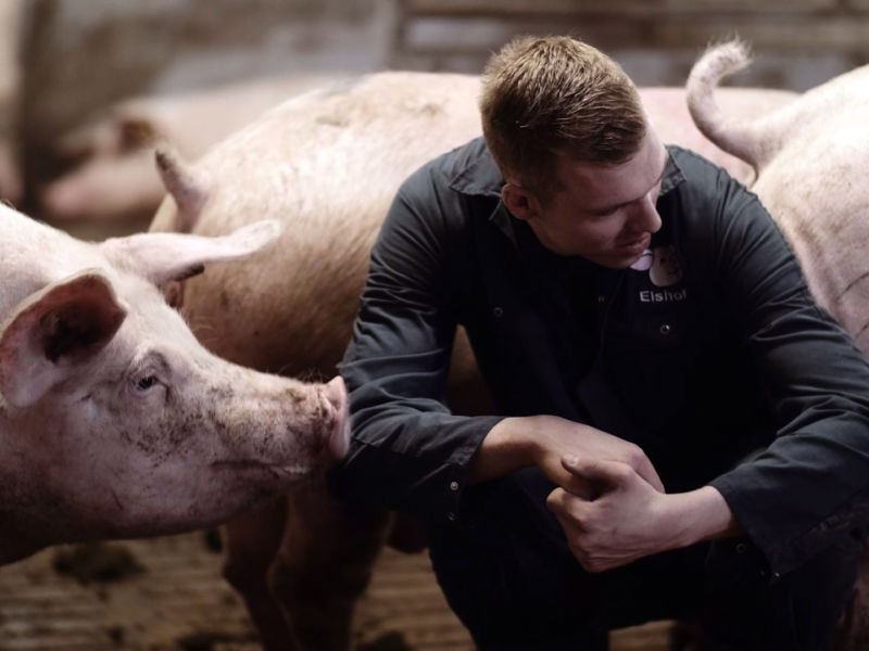 Nedap Farrowing Feeding: Edwin Elshof