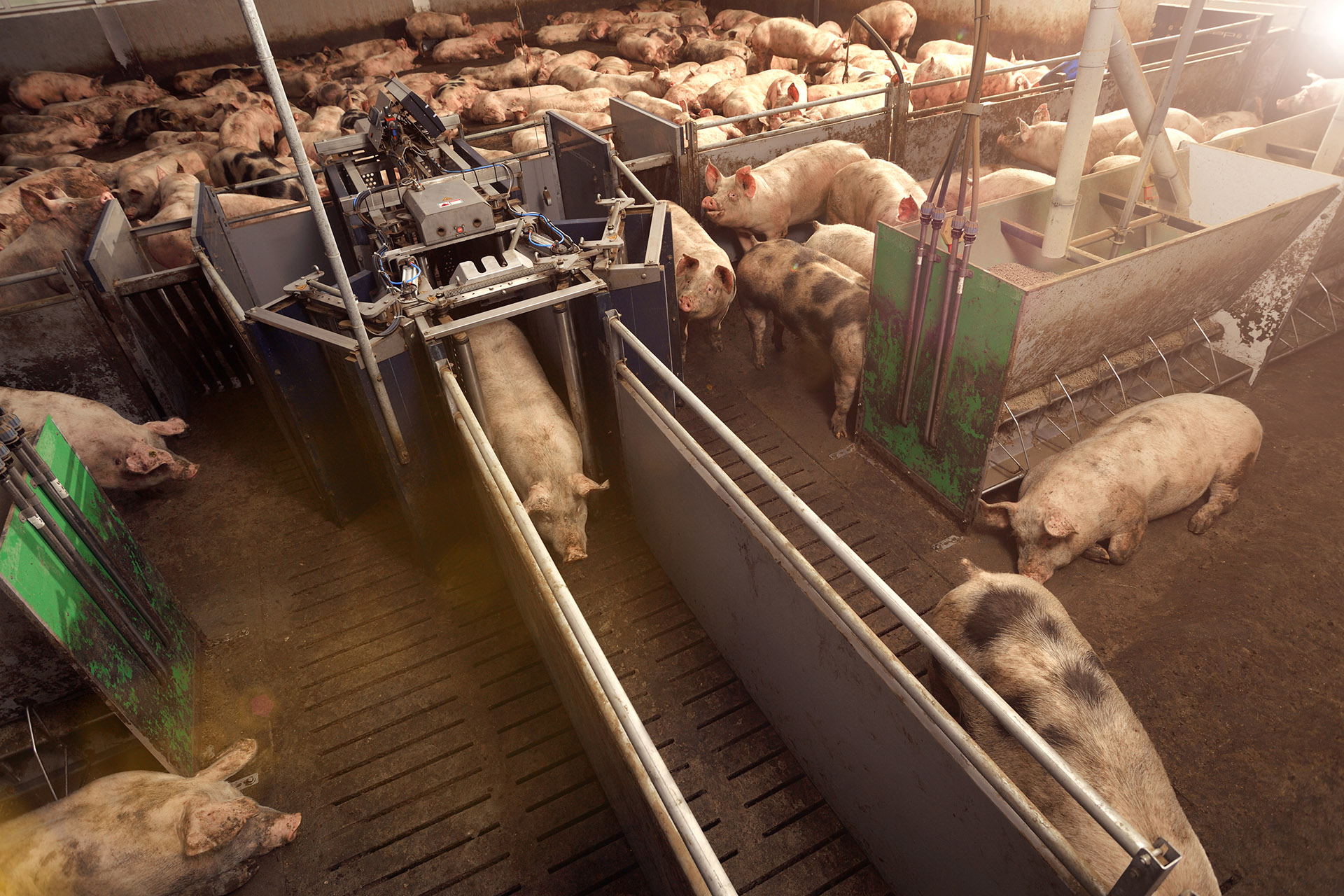 How can you use every square inch of your pig stall optimally?