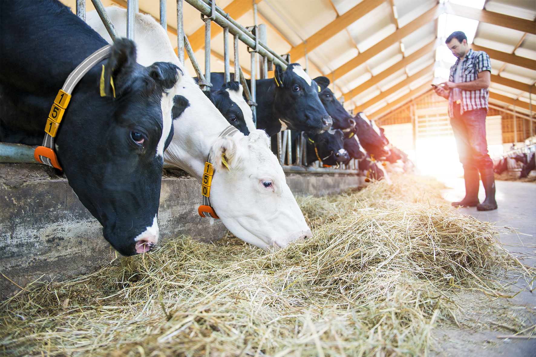 cogent-breeding-launches-precisioncow-with-nedap