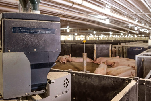 planning-for-the-future-of-sow-barns
